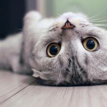 【獣医師執筆】飼い主さんなら知ってほしい「猫がかかりやすい病気」とは?