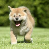 【獣医師執筆】セルフチェックで見つかることも!犬の死因の多くを占める病気とは?
