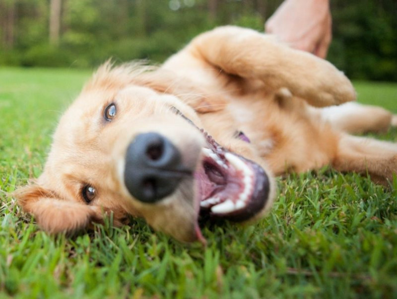 【愛玩動物飼養管理士執筆】セーターやマフラーにもなる!犬の抜け毛を「再利用」する方法