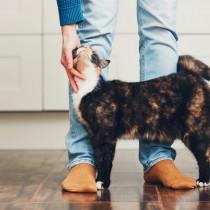初めて猫を飼う方必見!獣医が教える猫の選び方や準備すること