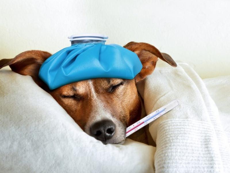 家にわんちゃんだけは危険!? 夏に注意したい「熱中症」と対策