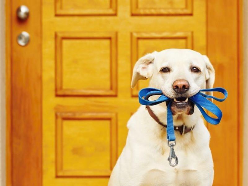 犬のお散歩いつからOK?知っておきたい「外遊び5つのポイント」