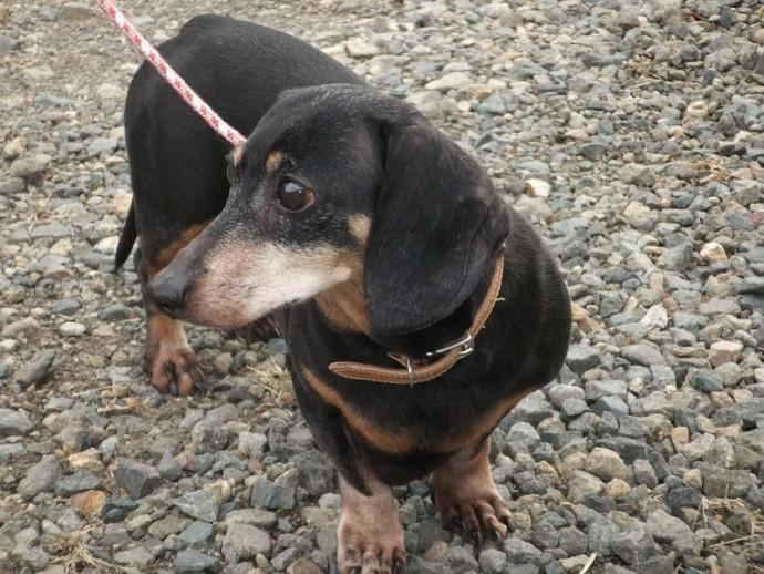 【獣医師執筆】病院に行けない犬猫のために…「往診治療」のメリット・デメリット