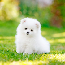 トイレやおもちゃにドックフード…子犬を飼うときに準備するものとは?