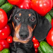 【獣医師執筆】愛犬と一緒に食べたい!夏バテを乗り切る「野菜スープ」レシピ