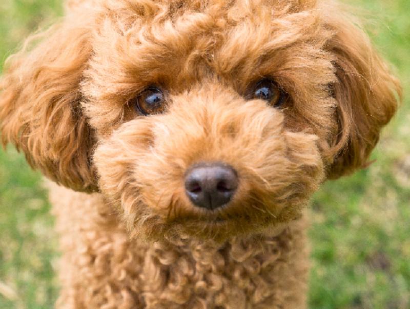 【獣医師執筆】犬は白黒しか認識できないって本当?知っておきたい犬の視界と目の病気