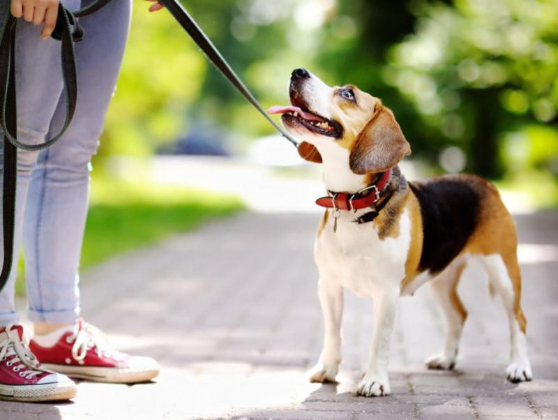【獣医師執筆】うちの愛犬にぴったりなのは?用途別「リードの選び方」を徹底解説