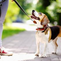 うちの愛犬にぴったりなのは?用途別「リードの選び方」を徹底解説