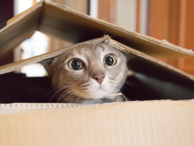 地震が起きたらどうするの?愛猫を守る「防災対策&対処法」
