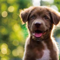 【獣医師執筆】状況別に獣医師が解説!犬が「咬みつく」理由としつけのポイント