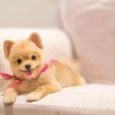 【獣医師執筆】硬さ・におい・色・回数…「犬のうんちで見る」簡単健康チェック法