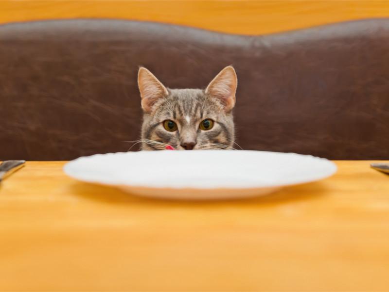 観葉植物も注意!命を落とす危険のある「猫が誤飲・誤食しやすいもの」4つ