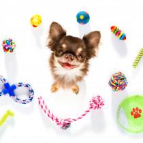【獣医師執筆】その遊び方間違ってない?しつけにも役立つ「子犬との正しい遊び方」