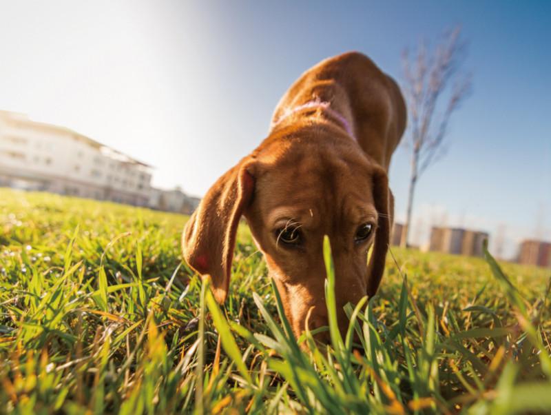 【獣医師執筆】なぜ犬はうんちを食べるの!? 「食糞と飲尿」の原因と正しくやめさせる方法