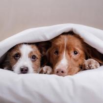 自然災害がきたらできる事とは?愛犬を守るために「地震の前後」にすべき対策