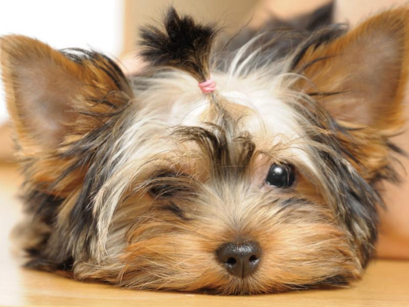 鼻がカサカサ…そのままで大丈夫?「犬の鼻が乾燥する原因」を解説