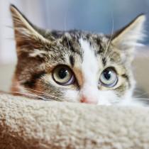 気になる「ノミやダニ」…どうやって発見するの?猫に寄生する理由と対処法