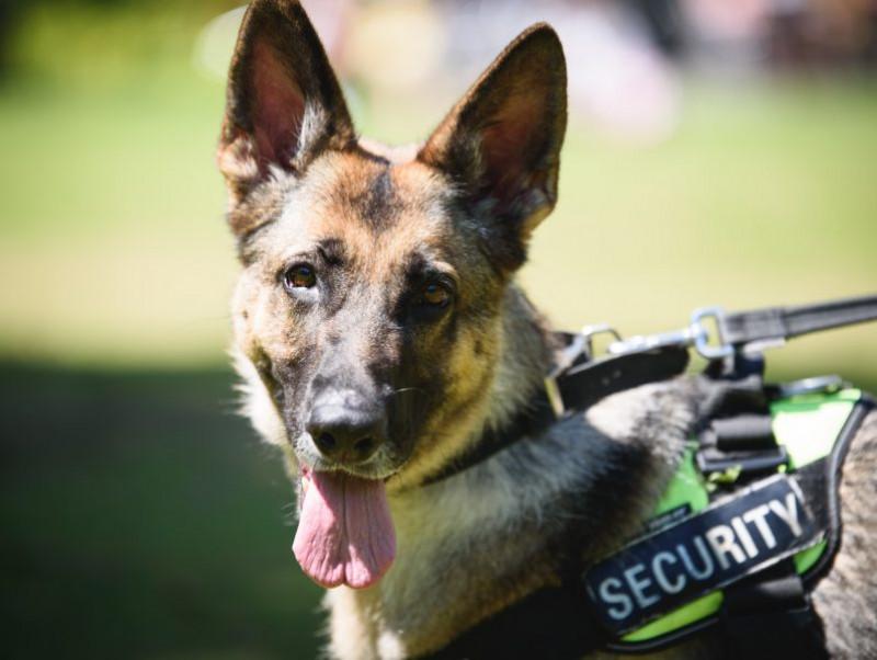 全国に約1,370頭!事件現場で活躍する「警察犬」の現状とは