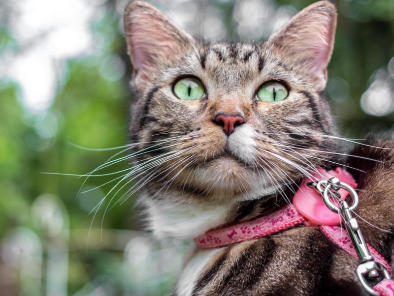 猫とおでかけするために!「慣れさせる方法と準備したい物」とは