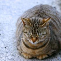 室内猫は太りやすい!? 飼い主さんが気をつけたい猫のメタボ化