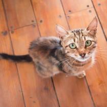 飼い主なら知っておきたい!注意すべき「猫の感染症」その原因と対策