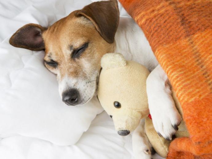 【獣医師執筆】犬って寒くないの?知っておきたい「体温メカニズム」と寒さ対策について