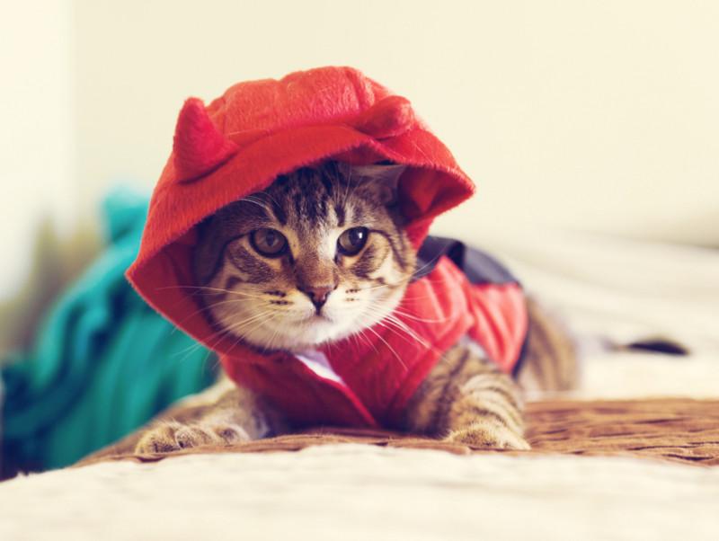 愛猫をもっとかわいくアレンジ!ハロウィンにできる「おすすめ仮装」5選