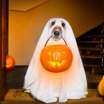 今年は一緒に楽しもう!愛犬の「ハロウィン仮装」お手軽アイデア3つ