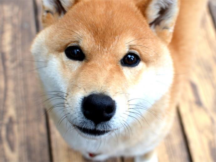 【獣医師執筆】それって病気のサインかも!? 犬の「目やに」からわかる目の健康状態とは