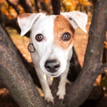 犬の眼を健康に保つために!「健康ケア」に取り入れたい食べ物3つ