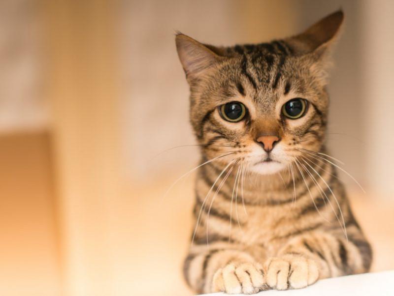 「発情期」の心配事を解決!猫も人も幸せになれる対処方法とは