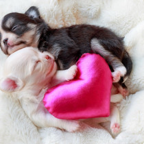愛犬が「お母さん」になるには?行動の変化や適切なケアについて