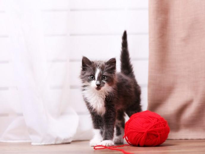 【獣医師執筆】うれしいの?怒ってるの?「猫のしっぽ」からわかる猫の気持ち