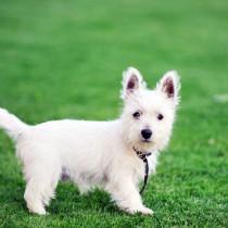 獣医師が伝授!子犬が「初めてお散歩」する前に準備すべきこと