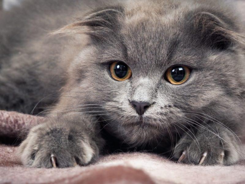 猫はどうして爪とぎをするの?しつけだけでは難しい「壁を守る対策法」を解説