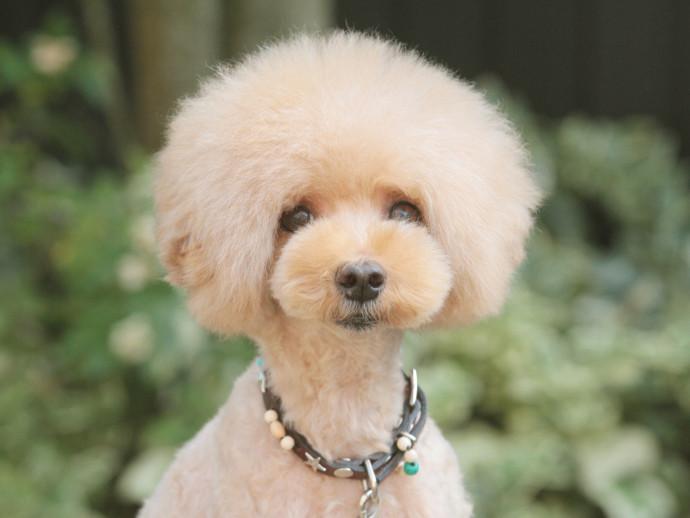 愛犬の「似合う」を探そう!トリミングサロンの選び方と人気カットスタイル6つ