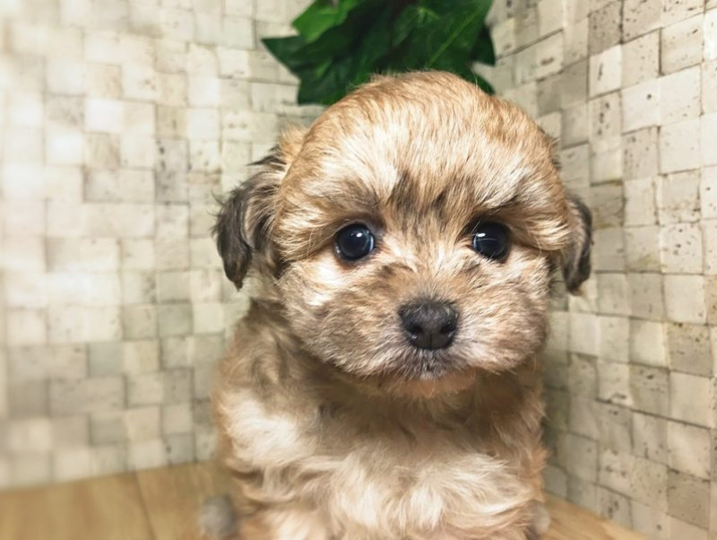 可愛すぎる「ミックス犬」5選!意外と知らない雑種犬との違いも解説