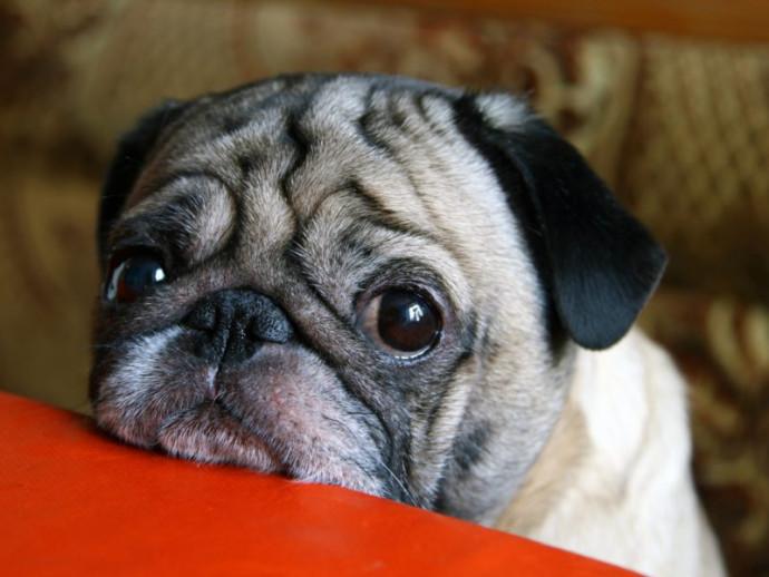 【獣医師執筆】犬の「夜鳴き」はどうしたらいい?環境や年齢によって異なる対処法とは