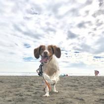 3つのポイントで劇的変化! カメラマンに教わる「犬の撮り方」〜実践編〜