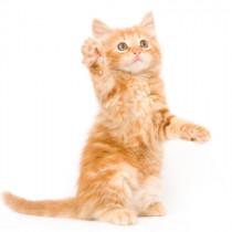 【獣医師執筆】猫心を読み取るコツって?「戦いを回避するための行動」を理解しよう