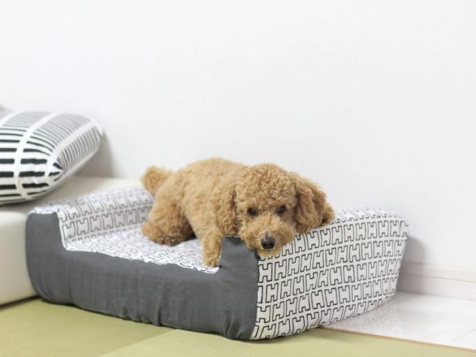 100均の商品で作れちゃう!小型犬におすすめ「あご乗せ付きソファ」をDIY