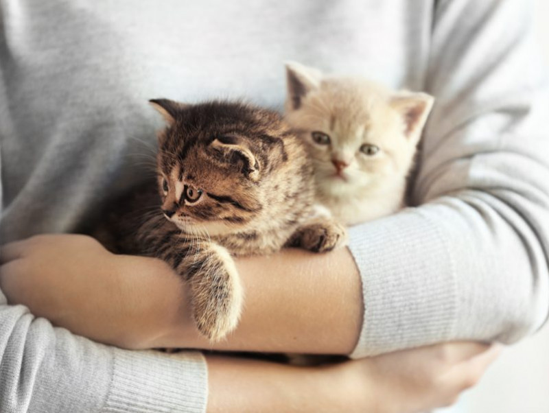 愛猫家がリアルに思う!「猫を飼っていてよかったと思う瞬間」5選