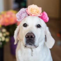 飼い主さんとの楽しい思い出が重要!犬の「記憶力」についてわかってきたこと