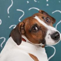 【獣医師執筆】これだけはやっちゃダメ!昔の常識は通用しない「犬の間違った飼い方」3つ
