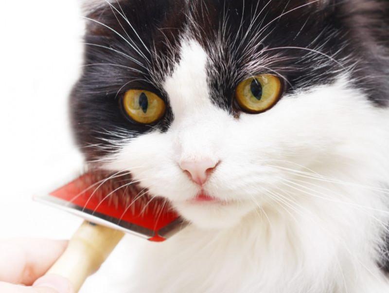 「ブラッシング大好き」を目指そう!猫の毛並みケア&健康チェック方法