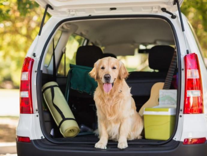 【獣医師執筆】愛犬と楽しくお出かけしよう!わんちゃんと「ドライブ」するときの注意点