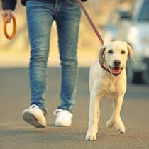 愛犬が行方不明になったらどうする!? 対処法を「ペット探しのプロ」が解説