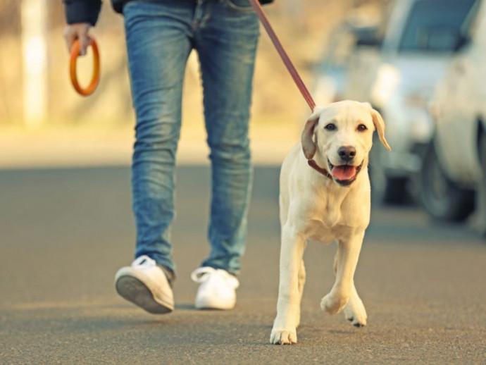 愛犬が行方不明になったらどうする!? 対処法を「ペット探偵のプロ」が解説
