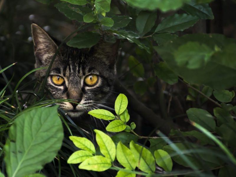 猫探しは真夜中が勝負!見つけるコツは「狭い場所」をくまなくチェック