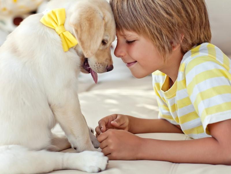 【獣医師執筆】楽しい思い出をたくさん作ろう!「子どもと犬」と一緒に仲良く暮らす方法